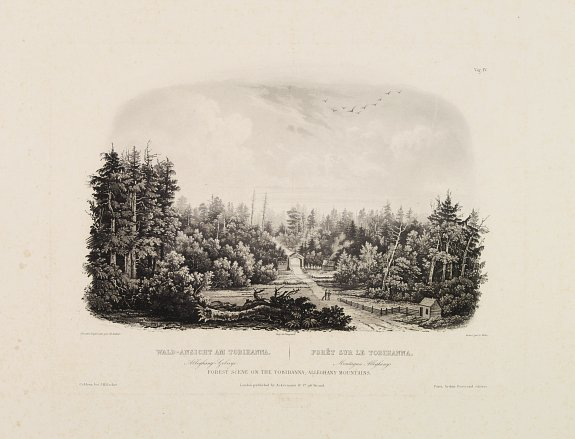 BODMER, Karl -  Forest scene on the Tobihanna Alleghany Mountains.