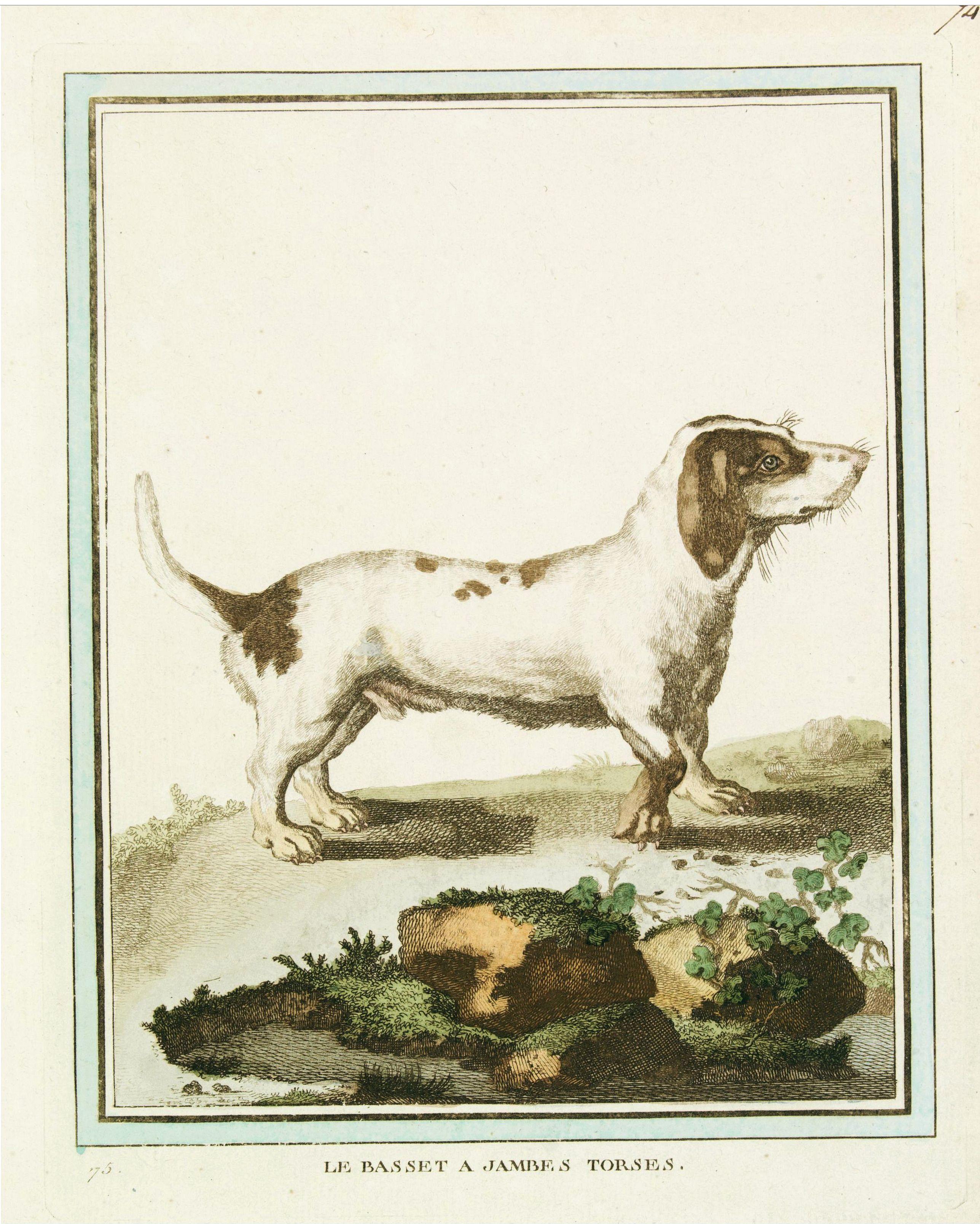DE SÈVE, After Jacques (active 1742-1788) -  Le Basset à jambes Torses.