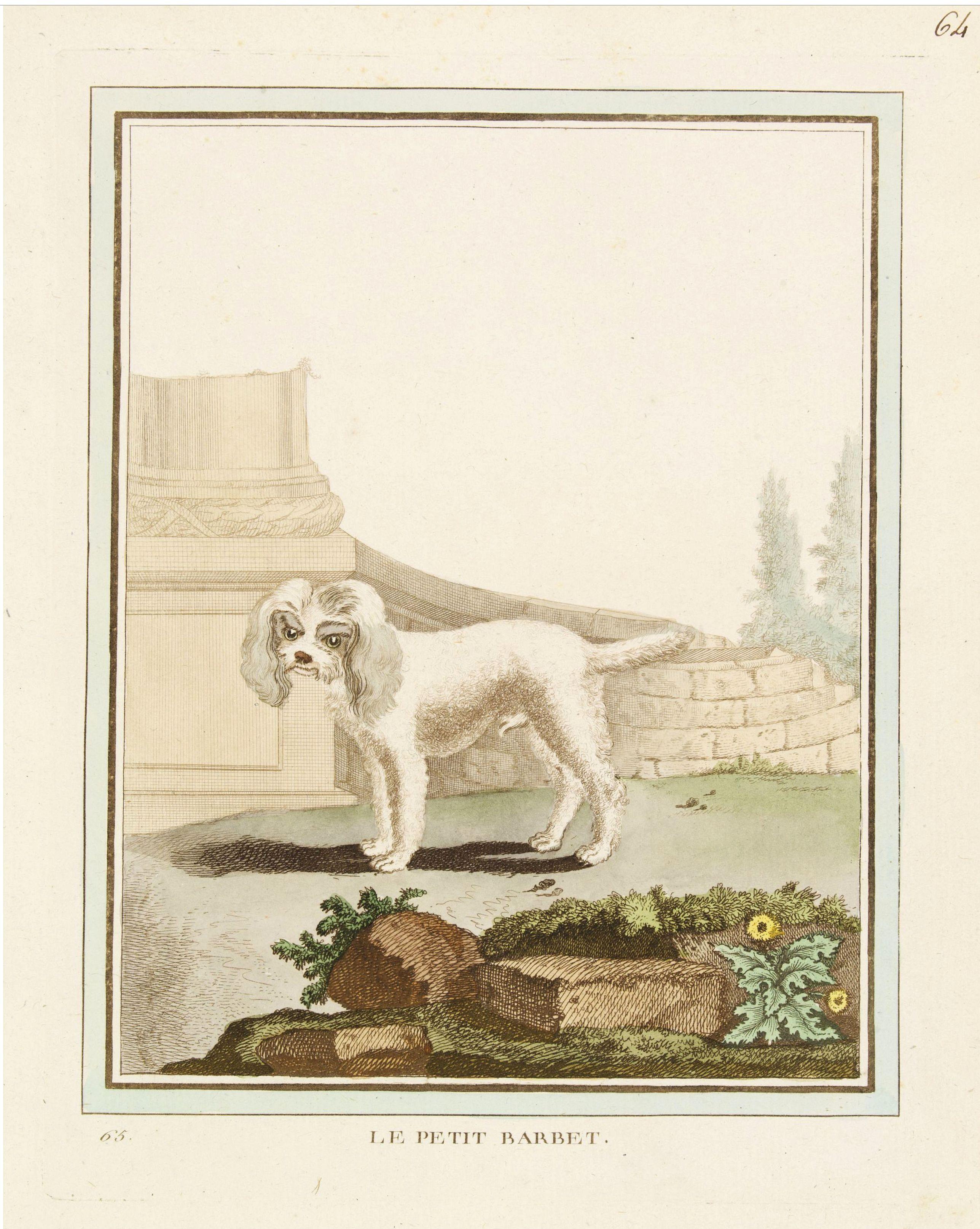 DE SÈVE, After Jacques (active 1742-1788) -  Le Petit Barbet.