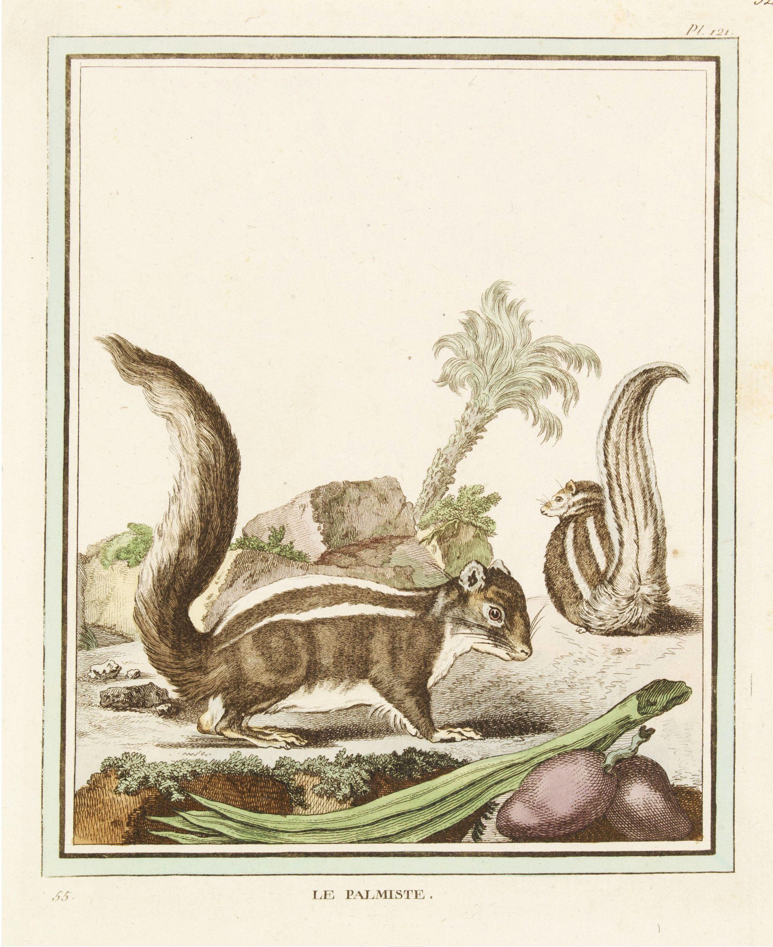 DE SÈVE, After Jacques (active 1742-1788) -  Le Palmiste [Pl. 121]