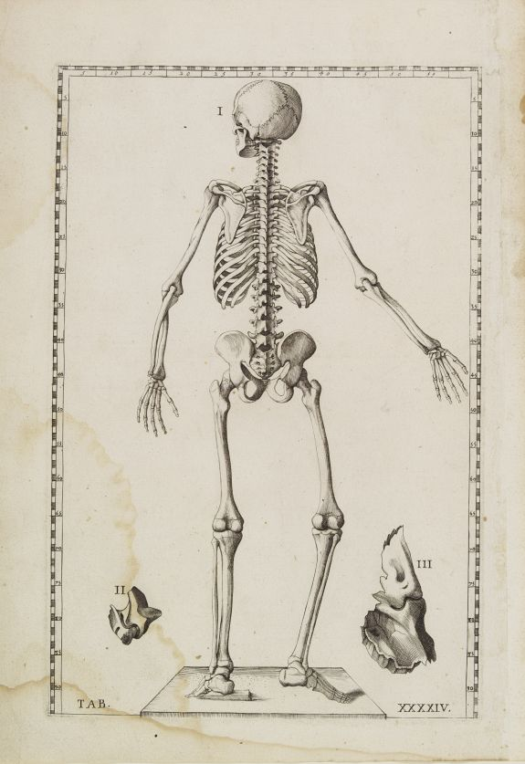 LANCISI, G.M.,  Anatomical print. TAB. XXXXIV., antique map, old maps