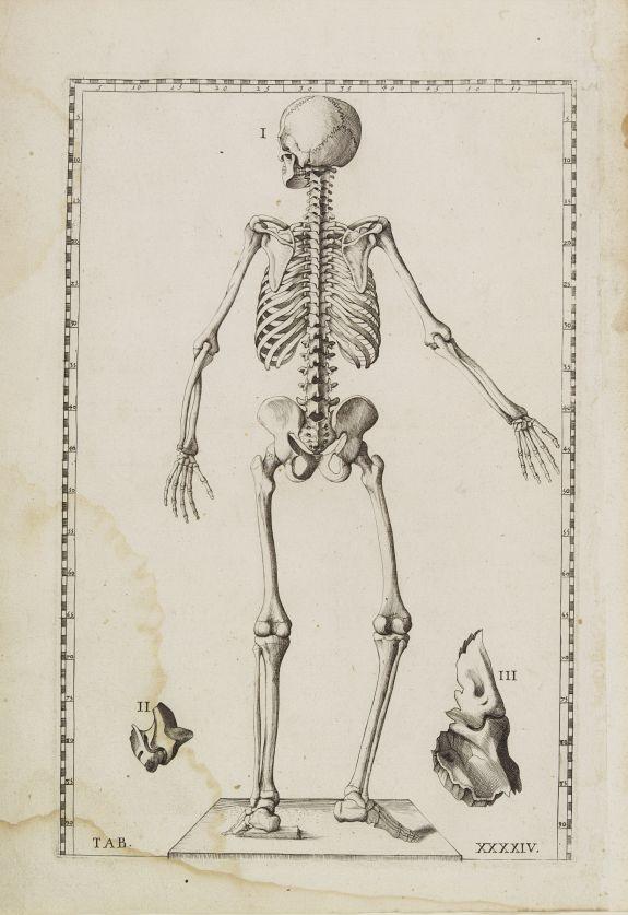 LANCISI, G.M. -  Anatomical print. TAB. XXXXIV.