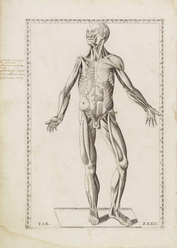 LANCISI, G.M. -  Anatomical print. TAB. XXXII.