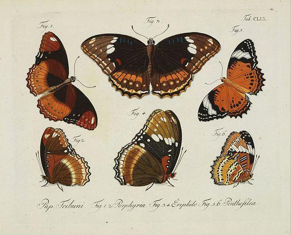 JABLONSKY, C.G. -  [Butterflies]