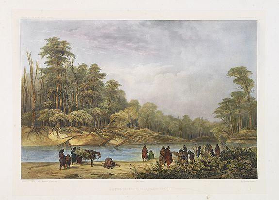 DUMONT D'URVILLE, J. -  Entrée des forêts de la rivière Sedger. . .