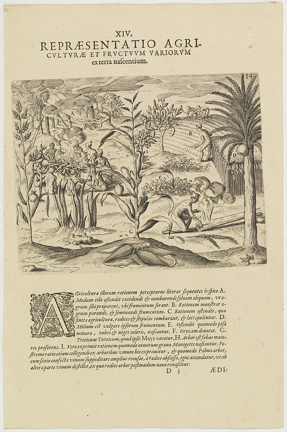 DE BRY, Th. -   XIV. Repraesentatio Agriculturae et Fructuum Variorum exterra nafcentium.
