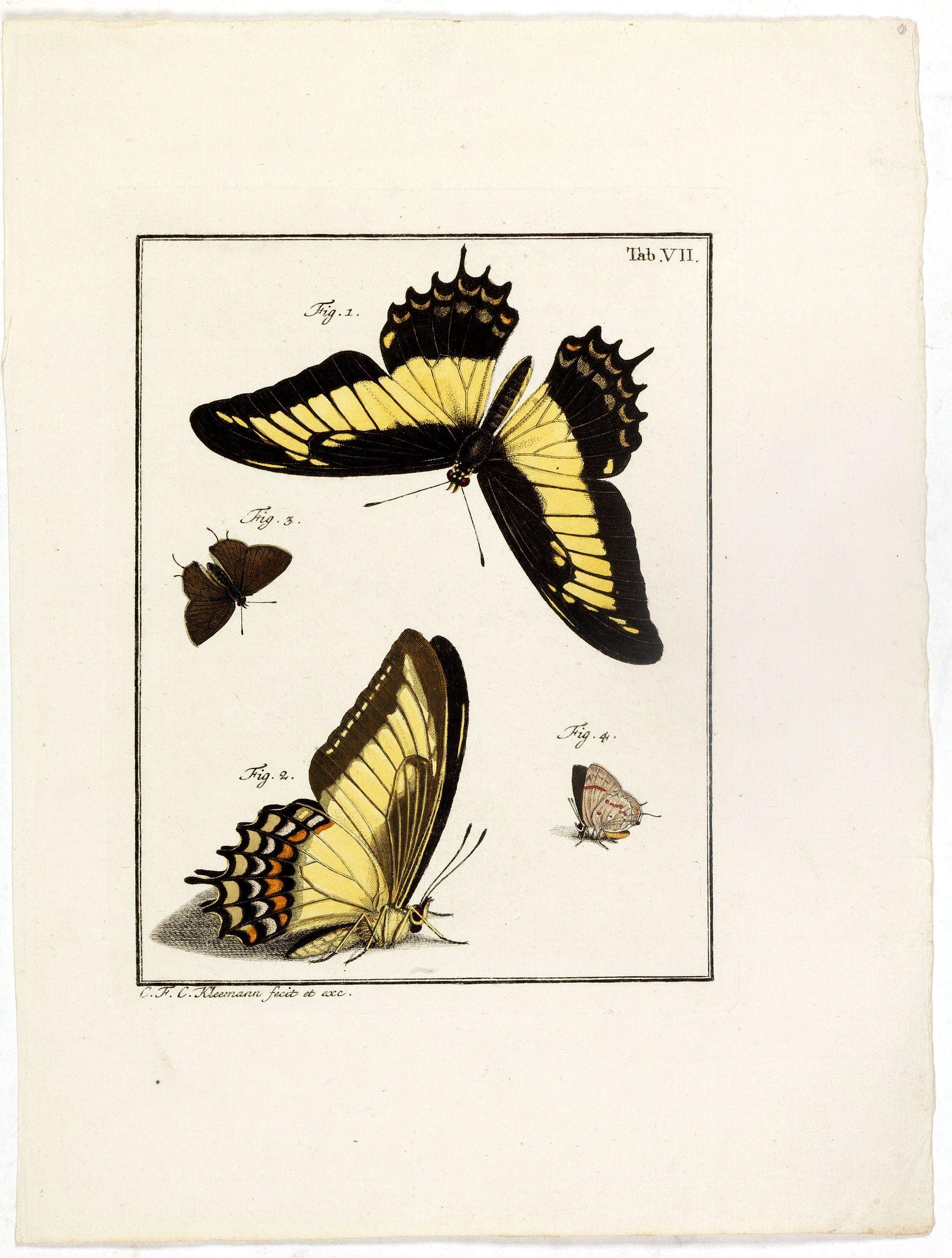 KLEEMANN, F. C. -  [Four butterflies on one sheet]