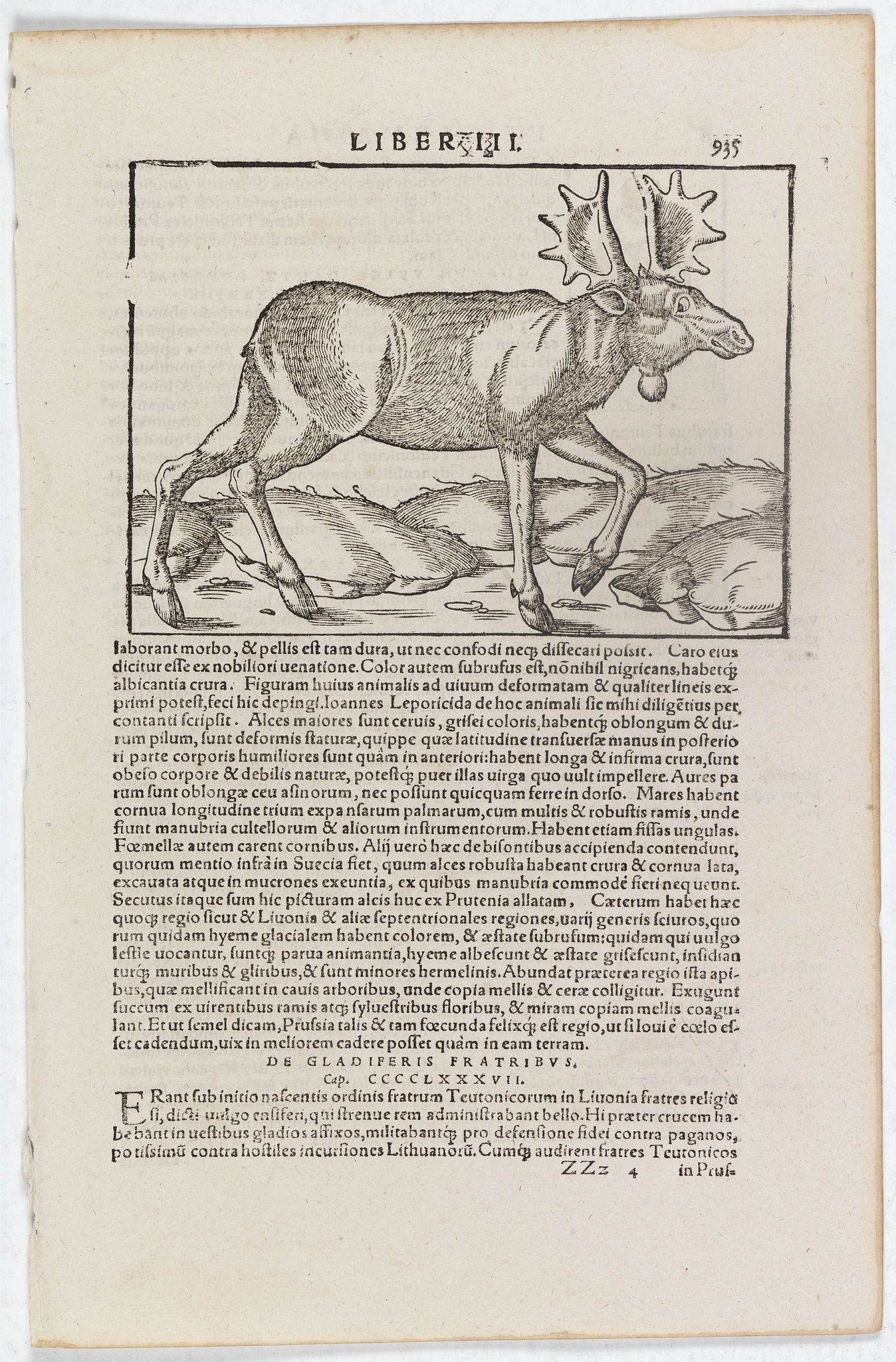 MÜNSTER, S. -  [Elch Moose]