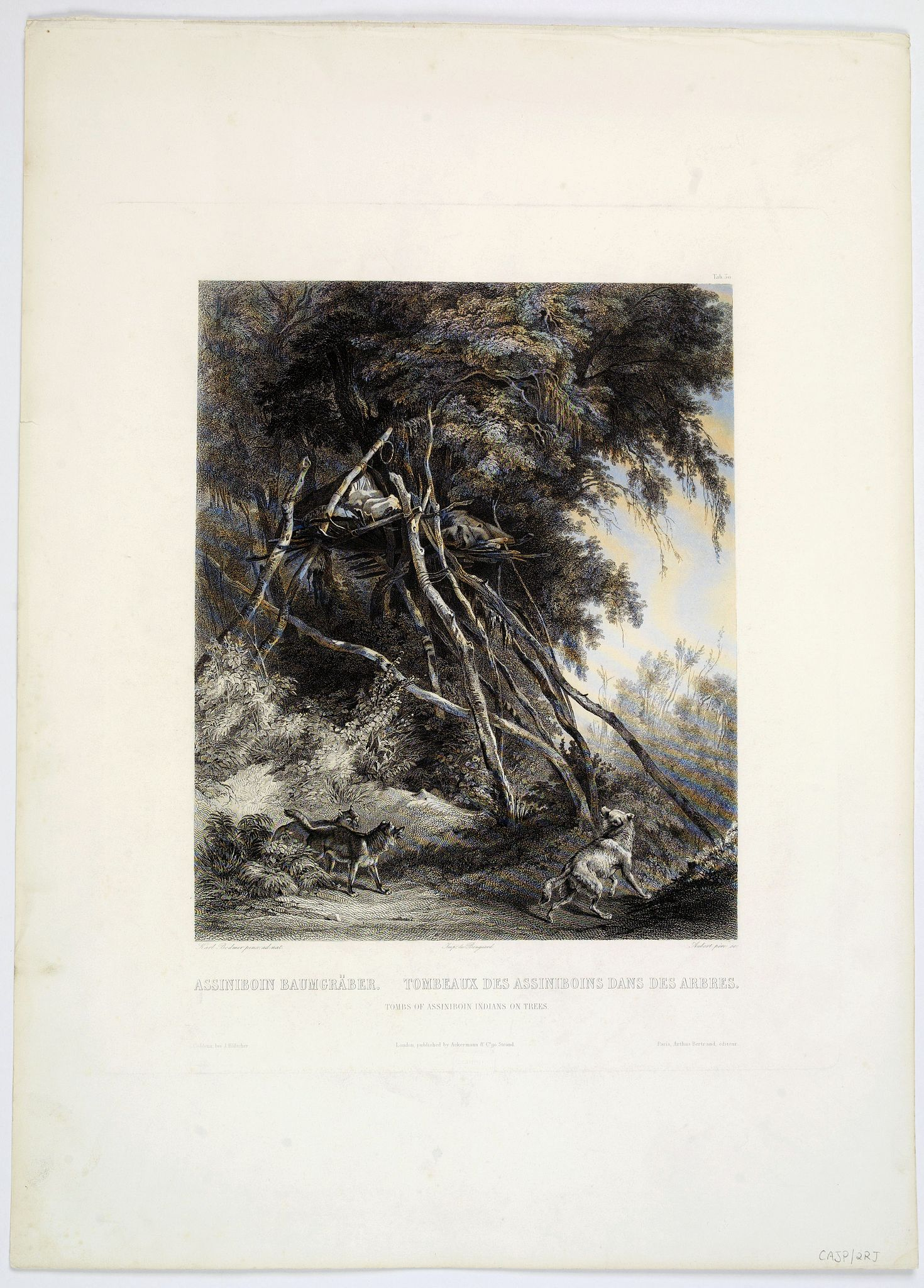 BODMER, Karl. -  Tombs of Assiniboin Indians on Trees.