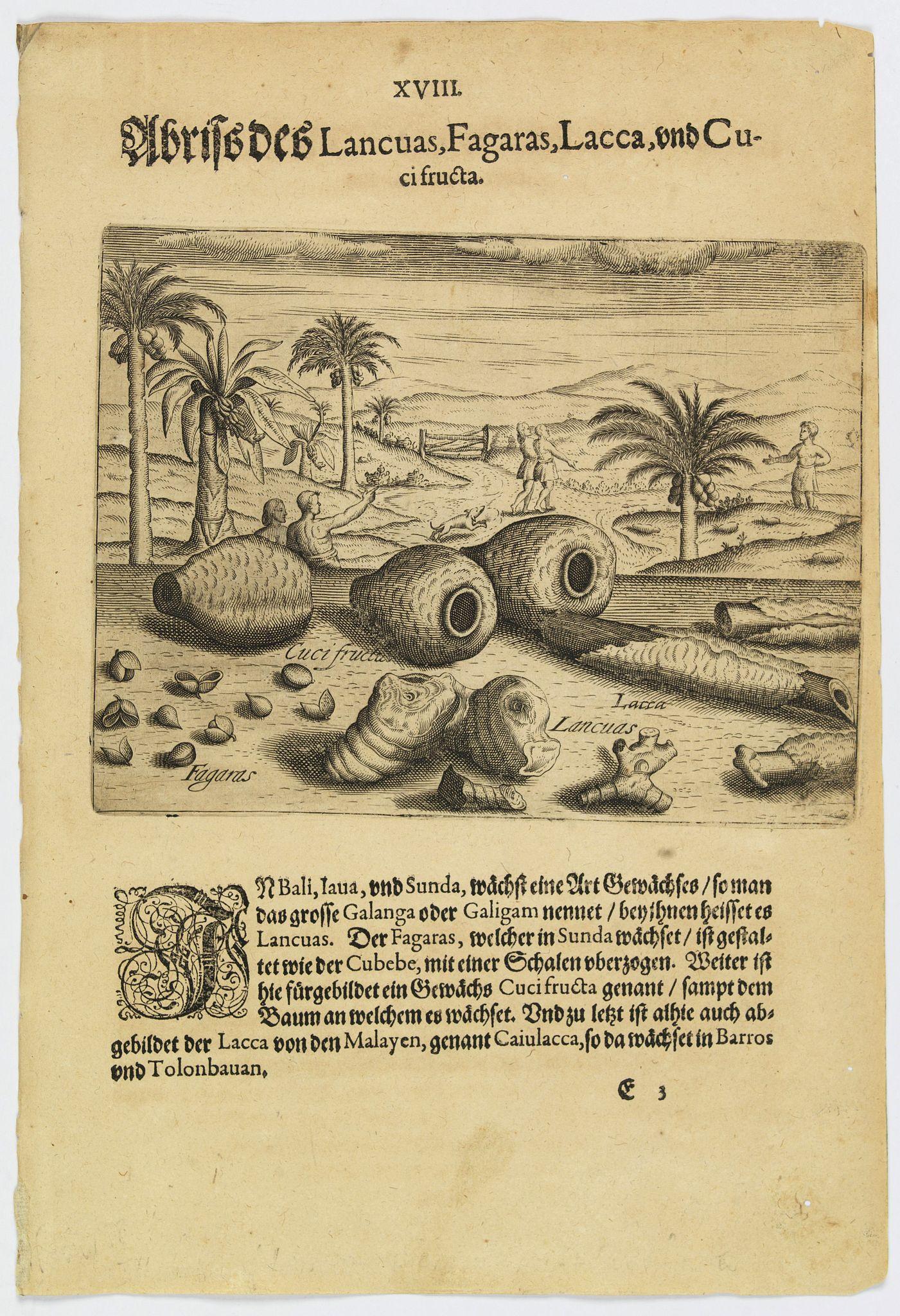 DE BRY, Th. -  Illustrations of Lancuas, Fagaras, Lacca and Cuci fructa.