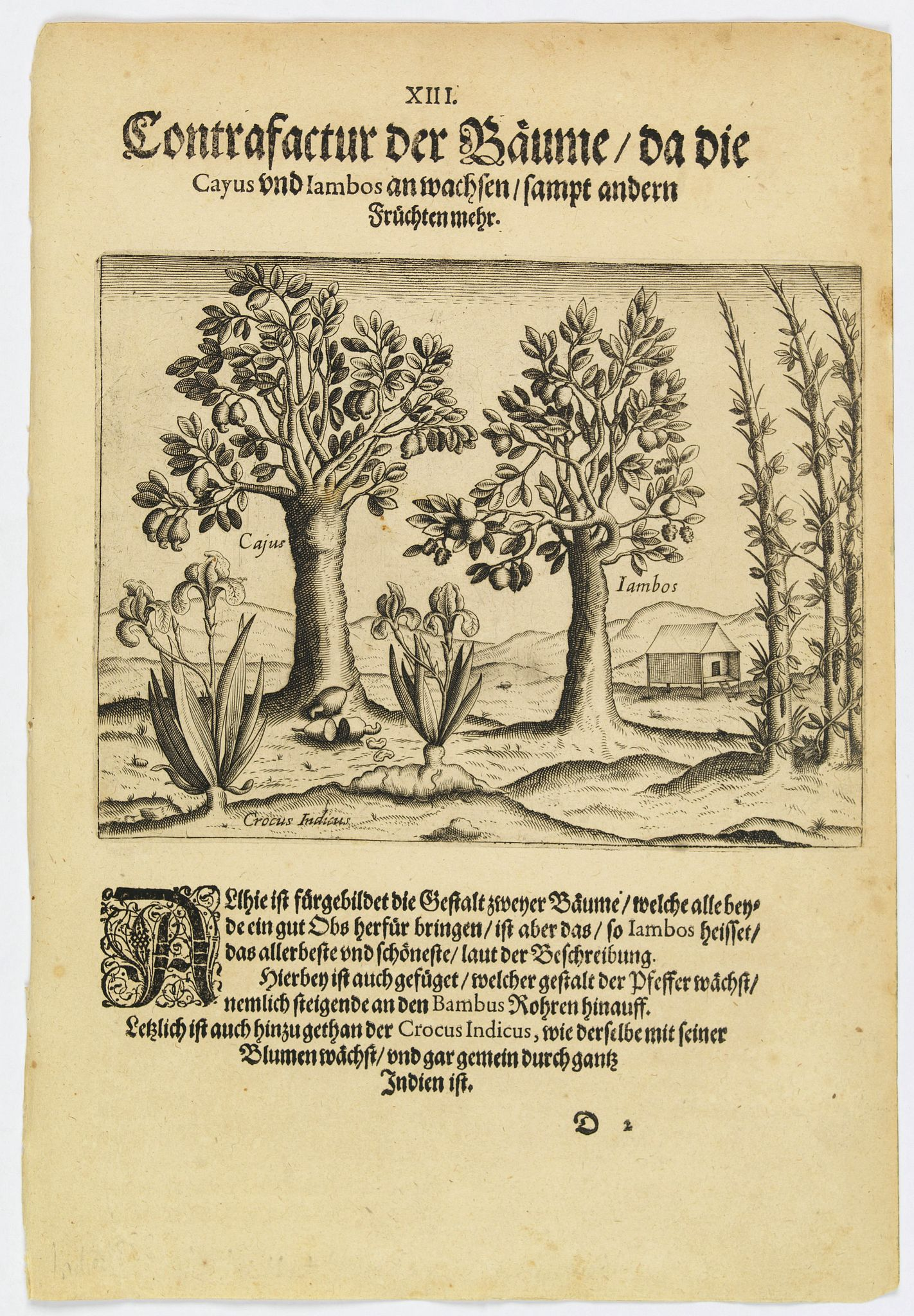 DE BRY, Th.,  The trees that bear Cayus and Jambos and other plants., antique map, old maps