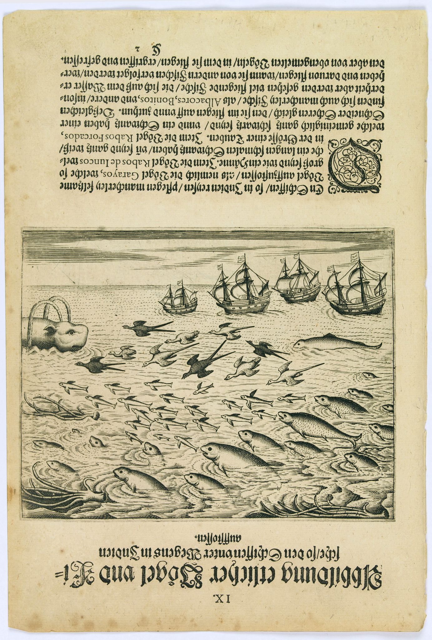 DE BRY, Th. -  Birds and fish seen during the voyage to India.