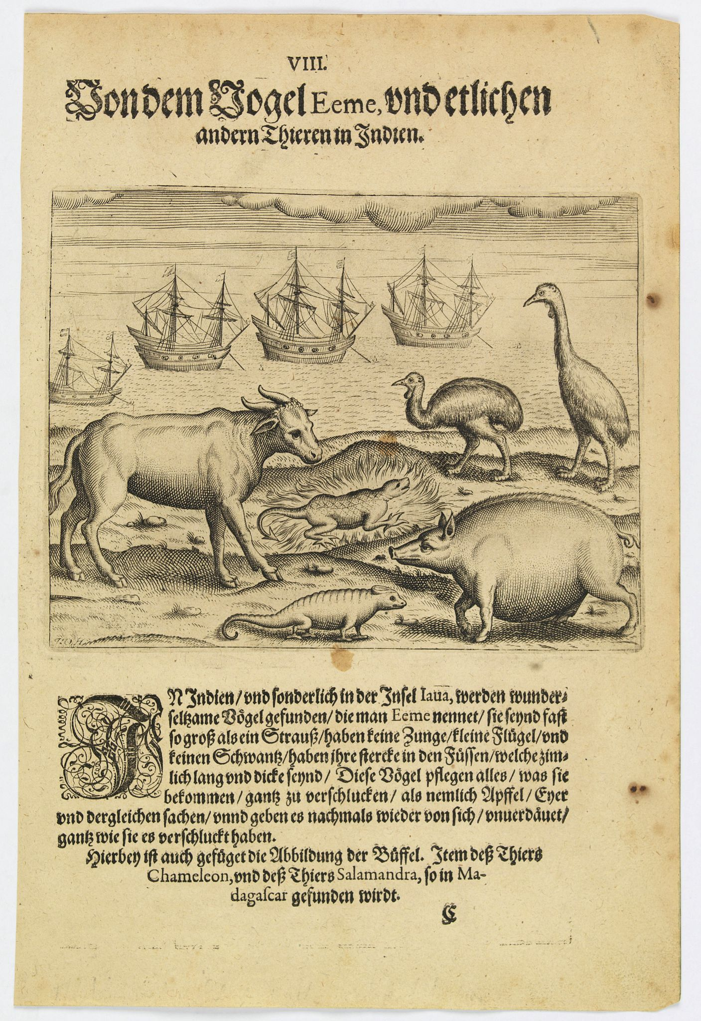 DE BRY, Th.,  The bird called 'Eeme' and other creatures of India., antique map, old maps