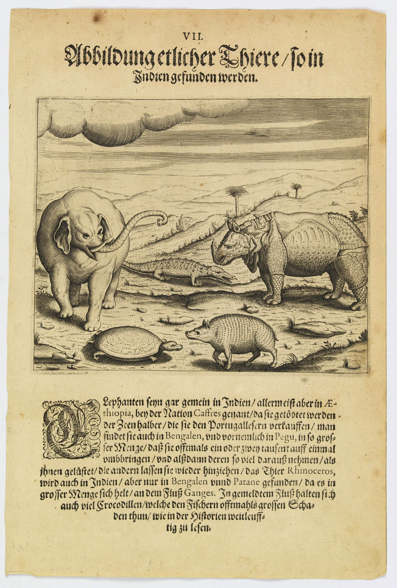 DE BRY, Th.,  Some of the animals that are found in India., antique map, old maps