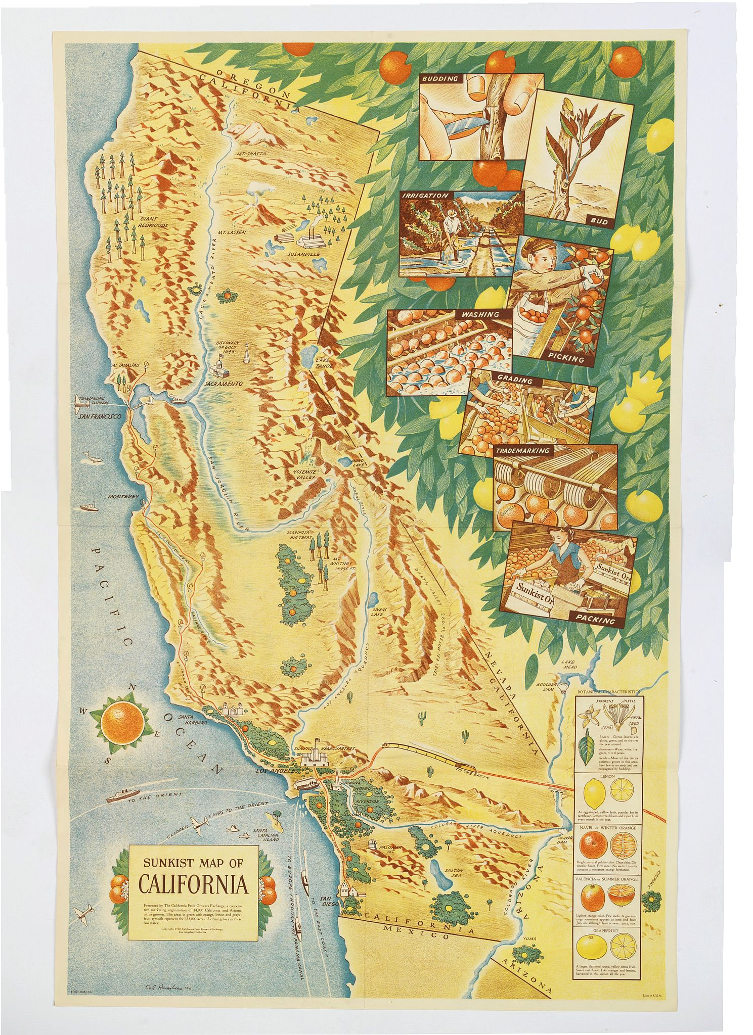THE CALIFORNIAN FRUIT GROWERS EXCHANGE. -  Sunkist Map of California.