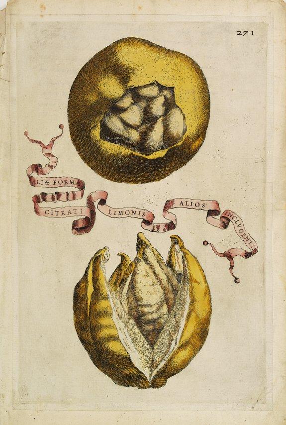 FERRARI, G. B. -  Aliae Formae Citrati Limonis Alios Includentis.
