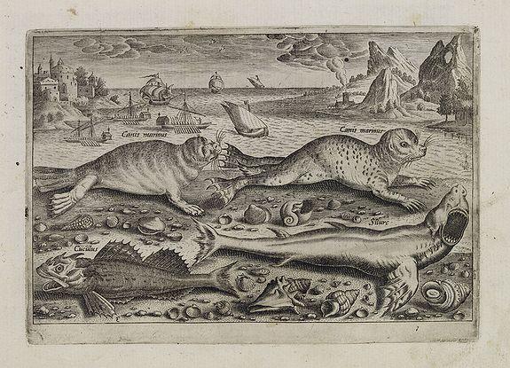 COLLAERT, Adriaen (after) -  Canis marinus. Cuculus. Silurc (Piscium Vivæ Icones - Fish)