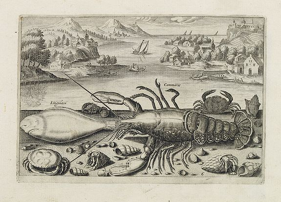 COLLAERT, Adriaen (after) -  Cammarus, Lingulaca. (Lobster, crab and shell fish)