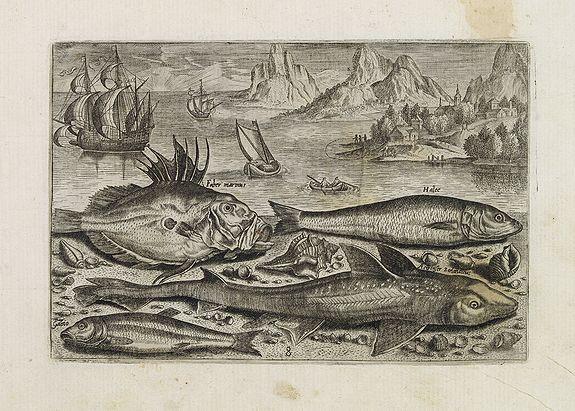 COLLAERT, Adriaen (after) -  Faber marinus, Halee, Gabio, Acipenser Zeelandicus. (Piscium Vivæ Icones - Fish)