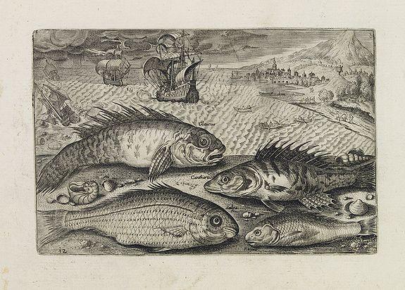 COLLAERT, Adriaen (after) -  Glaucus, Cantharus, Salpa, Rarus. (Piscium Vivæ Icones - Fish)