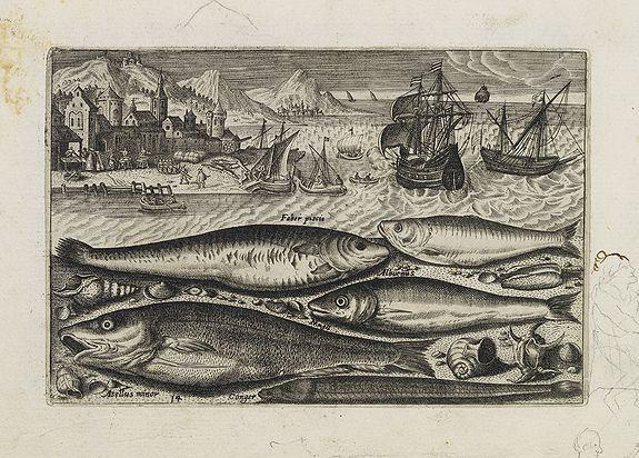 COLLAERT, Adriaen (after) -  Faber piscis, Asellus minor, Conger, Alburinus. (Piscium Vivæ Icones - Fish)