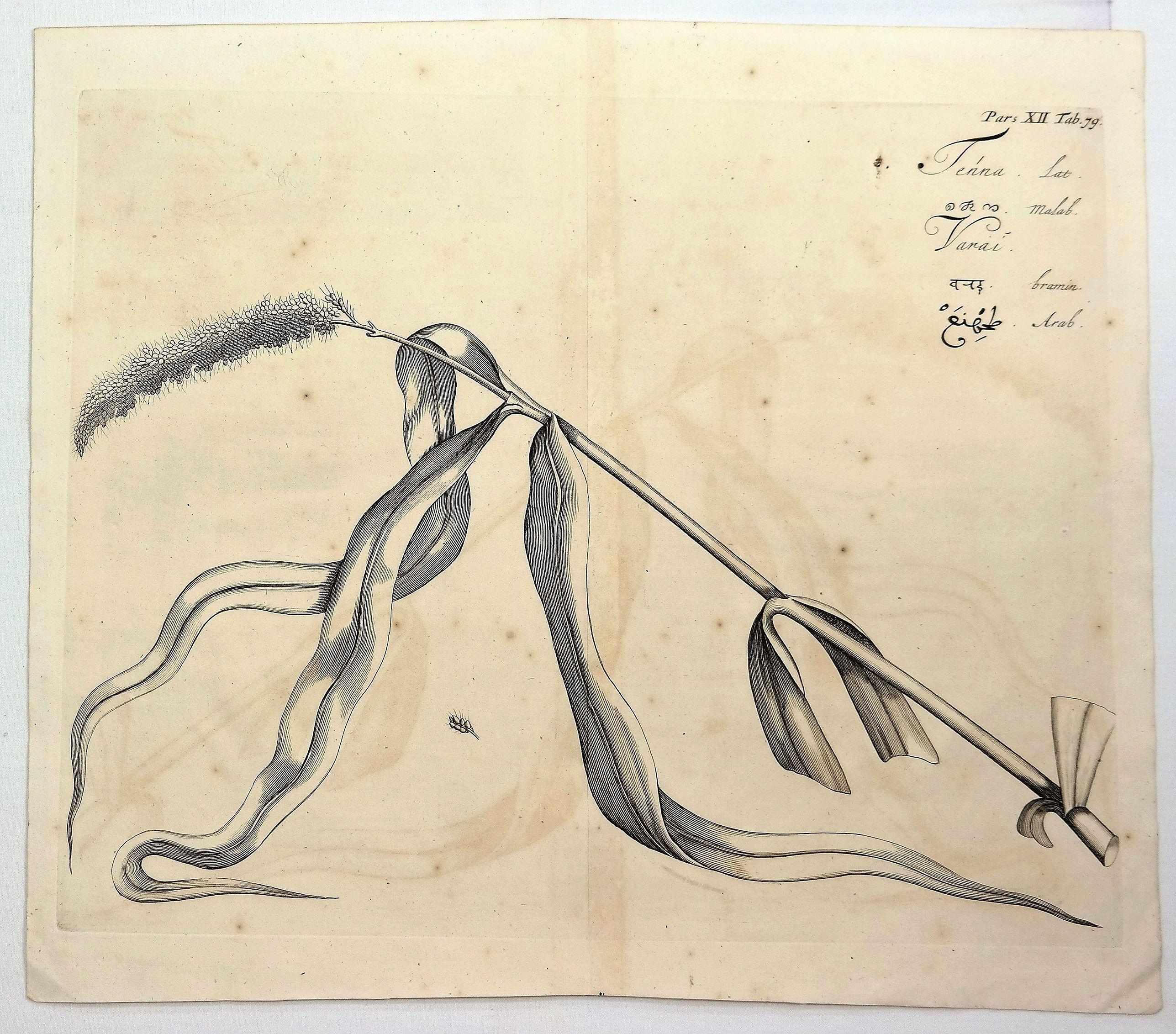 DRAKENSTEIN, H. - Tenna, Pars XII, Tab. 79.