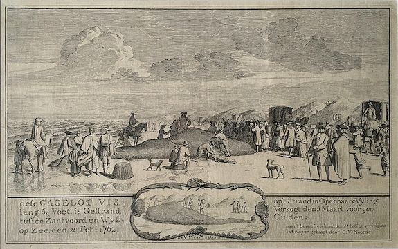 VAN NOORDE, Cornelis. - Extremely rare pair of two 18th-century broadsheets showing stranded whales at Dutch beaches. Set of two.