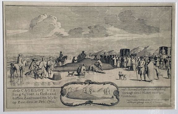 NOORDE, Cornelis van. - Cagelot Vis lang 64 Voet, is Gestrand tussen Zantvoord en Wyk, 1762.