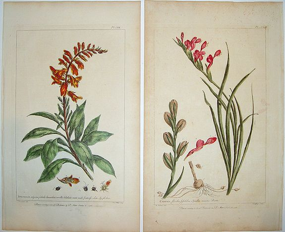 MILLER, Philip - Figures of the Most Beautiful and Uncommon Plants. . .